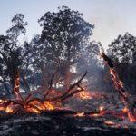 ۱۰ فقره آتش سوزی در جنگل های دزفول مهار شد