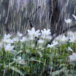 بارندگی امسال دزفول سه برابر پارسال بوده است